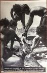 vintage-pc-view-of-australian-aboriginals-skinning-a-1